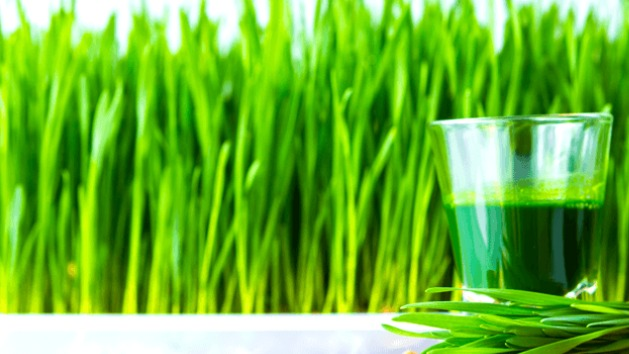 Wheatgrass available!